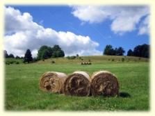 Ekologická farma