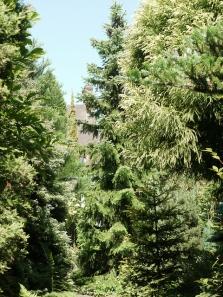 Prodej sazenic jehličnatých stromů