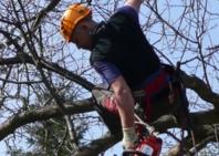 Orezávanie stromov