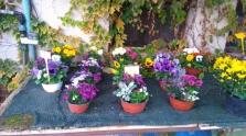 Dodávka hrnkových květin