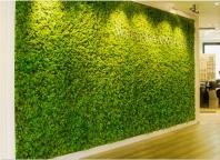 Zelené stěny a vertikální zahrady
