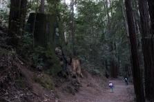 Služby v lesnictví - Richard Bartoň