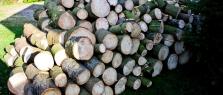 Palivové dřevo - Richard Bartoň