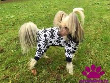 Oblečky a kombinézy pro psy Drahstyl
