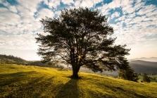 Kácení stromů a údržba zeleně - Lukáš Janeček