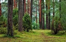 Lesní práce - STAV MV ZEM s.r.o.