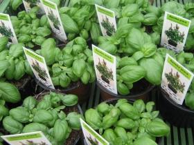 Pěstování a prodej hrnkových květin