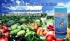 Internetový prodej rostlinných plodin