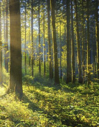 Výkup dřeva a lesních porostů