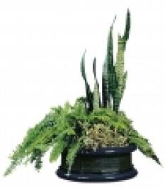 Váza Dominik