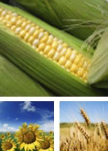 Výkup a nákup zemědělských komodit