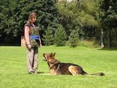 Výcvik psa trenérom