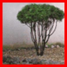 Zazimovanie chúlostivých rastlín