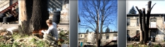 Kácení stromů a jejich ořez