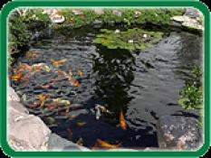 Jezírkové ryby