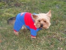 Kombinézy a oblečení pro psy