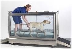 Veterinárna medicína - Hydroterapia Hydro Physio