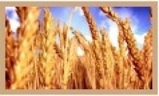 Precízne poľnohospodárstvo - N senzor