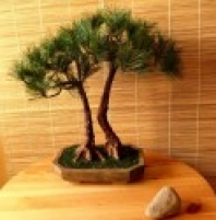 Umělá bonsai Borovice Double (48cm)