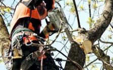 Pily pro ošetřování stromů