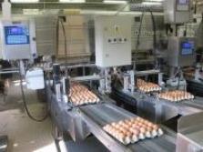 Slepačie vajcia