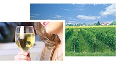 Italská vína – import