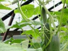 Síť na vyvazování popínavých rostlin