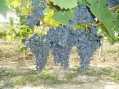 Rozvoz vín