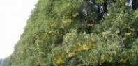 Bezpečnostní vázání korun stromů