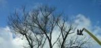 Pěstební zásahy v uličních stromořadí