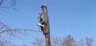 Štěpkování dřevní hmoty