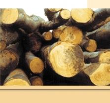 Nákup, výroba  a prodej výrobků ze dřeva