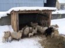 Prodej zvířat