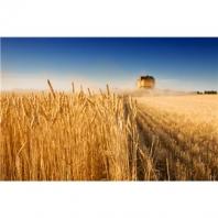 Krmné zbytky z výroby cereálních potravin