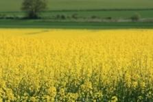 Zemědělské komodity