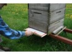 Varroa Monitoring podložky
