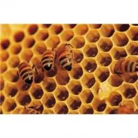 Veškeré včelí produkty