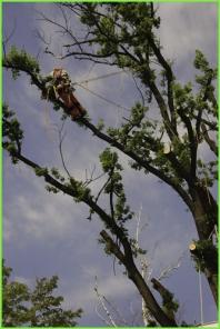 Arboristika - ošetřování dřevin