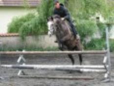 Jezdecký výcvik koní