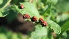 Hnojiva, pesticidy, zemědělská chemie