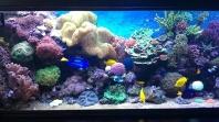 Morské akvárium podľa Vašich želaní na kľúč