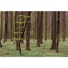 Ing. Karel Kloud - palivové dřevo a stavební řezivo