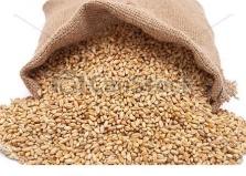 Krmné směsi, obilniny, olejniny