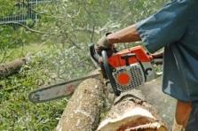 Kácení stromů, výškové práce