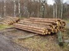 Pořez dřeva