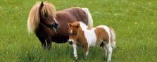 Miniškolička pro děti na pony