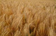 Poľnohospodárska výroba Milan Boďa