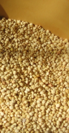 Nabídka - QUINUA, vysoce nutriční plodina z Peru