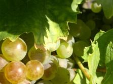 Vinohradnícke avinárske potreby