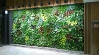 Zelené stěny